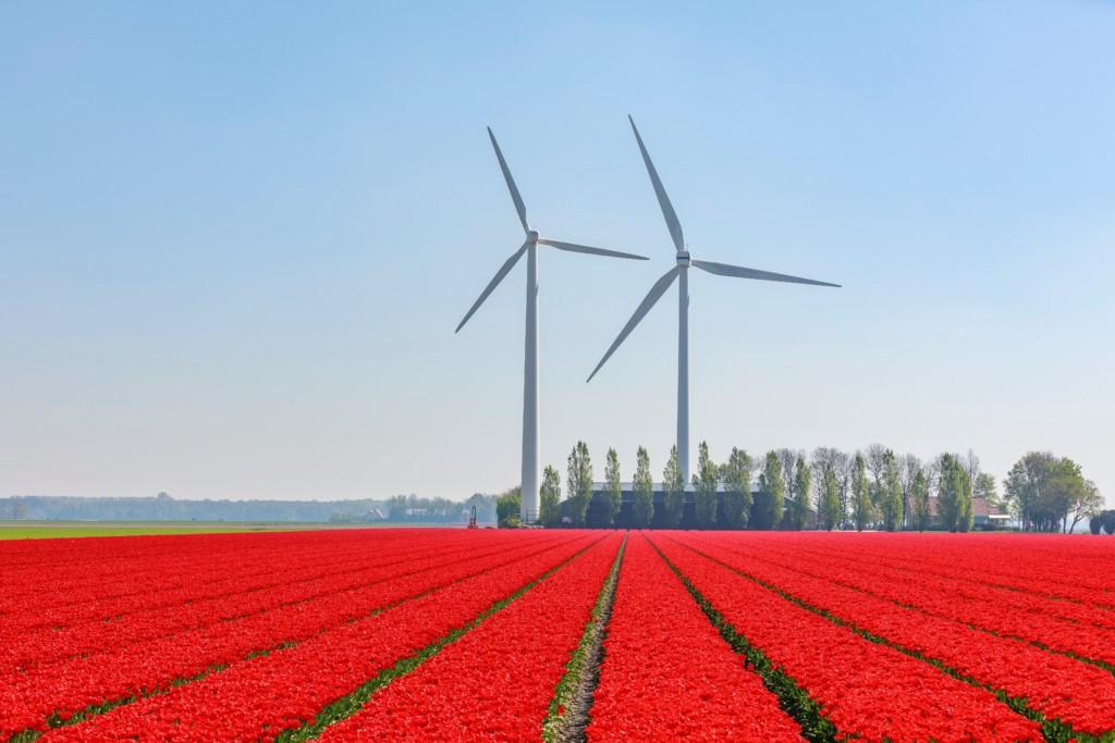 Frühjahr in Holland